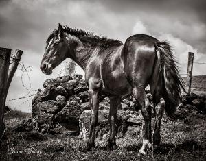 darkhorse1.jpg