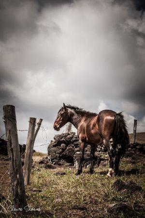 wildhorse-1-11.jpg