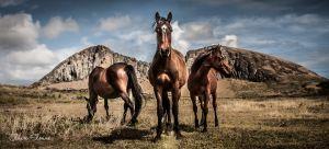 wildhorse-1-4.jpg